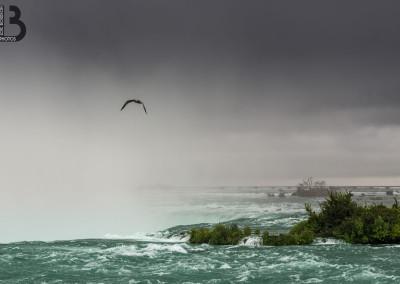 Les chutes du Niagara vues d'en haut avec mouette