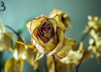 Roses sur fond vert